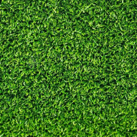 The lawn Rolls Classic of Festuca Arundinacea and Poa